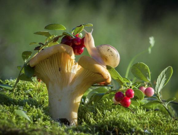 The Design of Small Garden – 10 Best Ideas